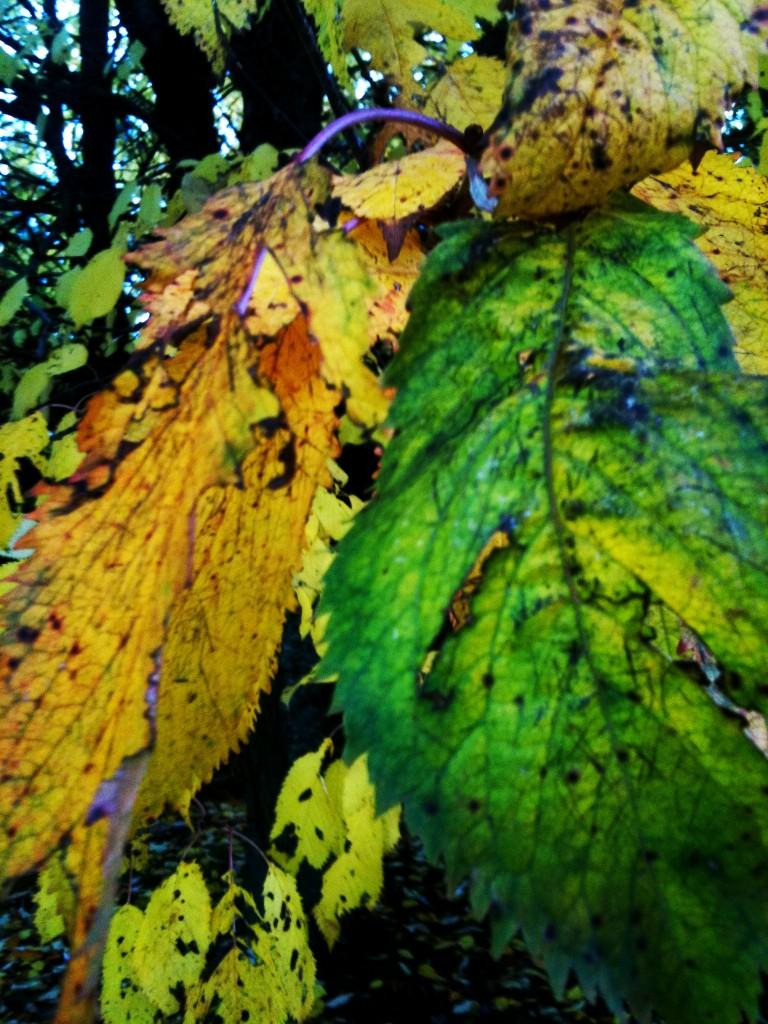 1st November 768x1024 Autumn Colours