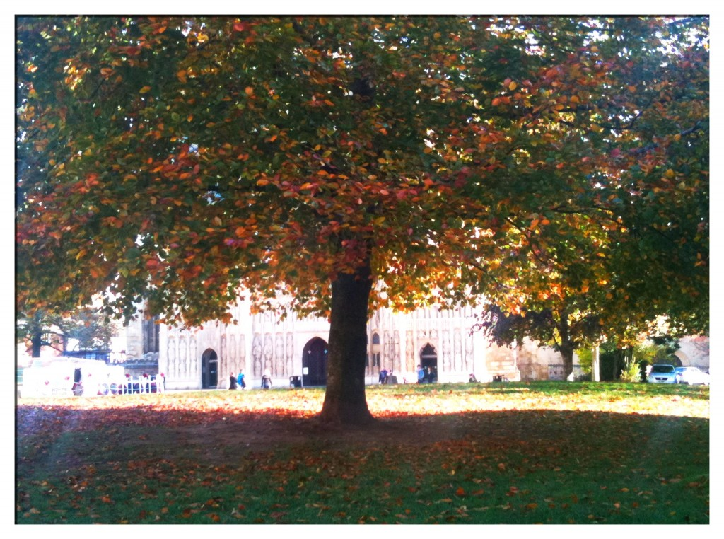 November7th 1024x762 Wondering around #Exeter Cathedral Green